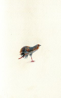 Ocellated Crake, realist gouache on paper miniature bird portrait, 2020