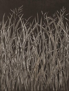 Grasses (1), contemporary realist graphite botanical still life drawing, 2020