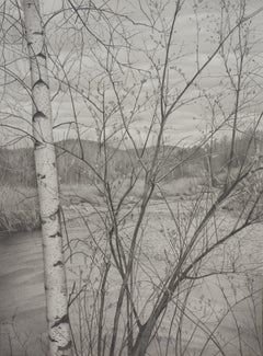 Riverbank 4, photorealist graphite landscape drawing, 2020