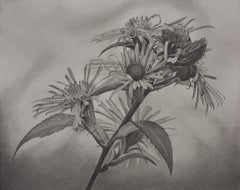 Flowering Hillside 4, photorealist graphite floral drawing, 2020