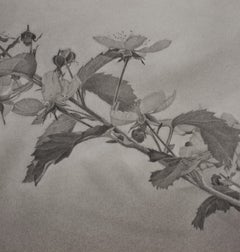 Flowering Hillside 3, photorealist floral graphite drawing, 2020