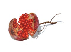 Pomegranate, photorealist fruit still life drawing, colored pencil