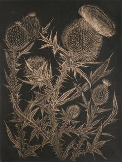 Thistle 4, realist botanical still life drawing, goldpoint