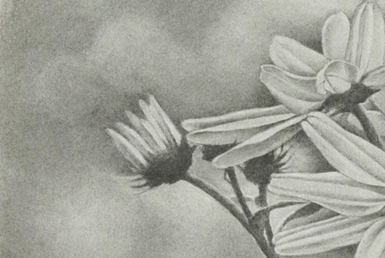 Reilly uses a toning technique to endow her graphite works with a smooth, seamless quality. Rather than distinct outlines, her flower petals glide gracefully into the surrounding space. It is this sense of delicacy, coupled with precision of her