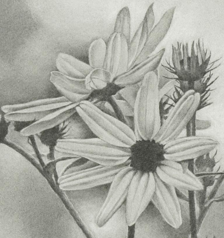 Mary Reilly, Wildflower, Central Park, Photorealist graphite drawing, 2011 - Gray Figurative Art by Mary Reilly