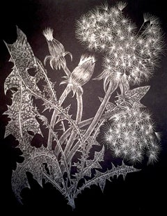 Margot Glass, Two Dandelions, graphite on paper realist still life drawing, 2018
