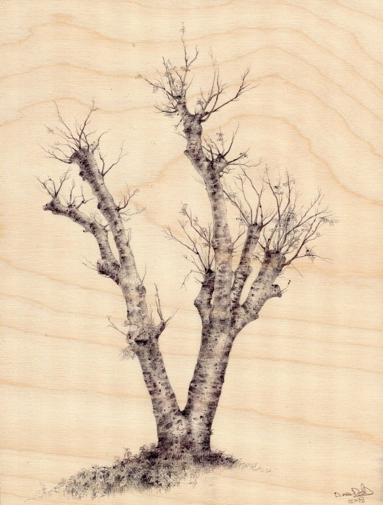 """In her ballpoint pen on wood miniature, """"Hamilton Tree 3265,"""" Dina Brodsky uses a sketch-like approach to capture the texture of the tree bark, and the delicacy of its branches. By allowing the wood support to peer amply through the negative space"""