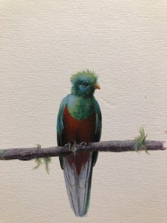 Dina Brodsky, Quetzal, realist gouache and watercolor animal miniature, 2018