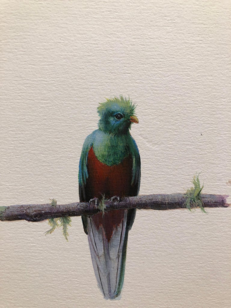 Dina Brodsky, Quetzal, realist gouache and watercolor painting, 2018 - Art by Dina Brodsky