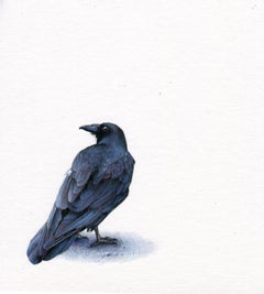 Raven, contemporary realist animal watercolor on paper