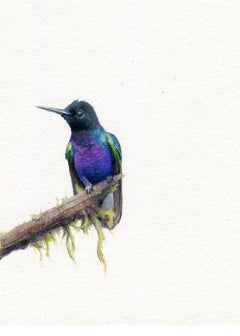 Dina Brodsky, Velvet Coronet, realist animal watercolor on paper, 2019