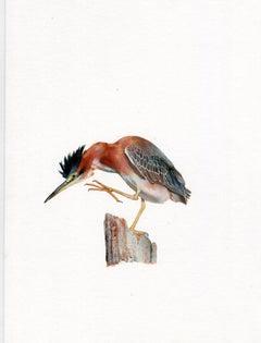 Dina Brodsky, Shore Bird, realist animal watercolor on paper, 2019