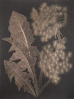 Margot Glass, Two Dandelions (a), realist goldpoint floral still life drawing