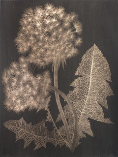 Margot Glass, Two Dandelions (b), realist goldpoint floral still life drawing