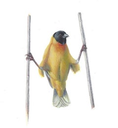 Dina Brodsky, Yellow Bird Akimbo, realist gouache miniature animal portrait