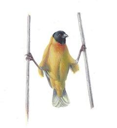 Yellow Bird Akimbo, contemporary realist gouache miniature animal portrait