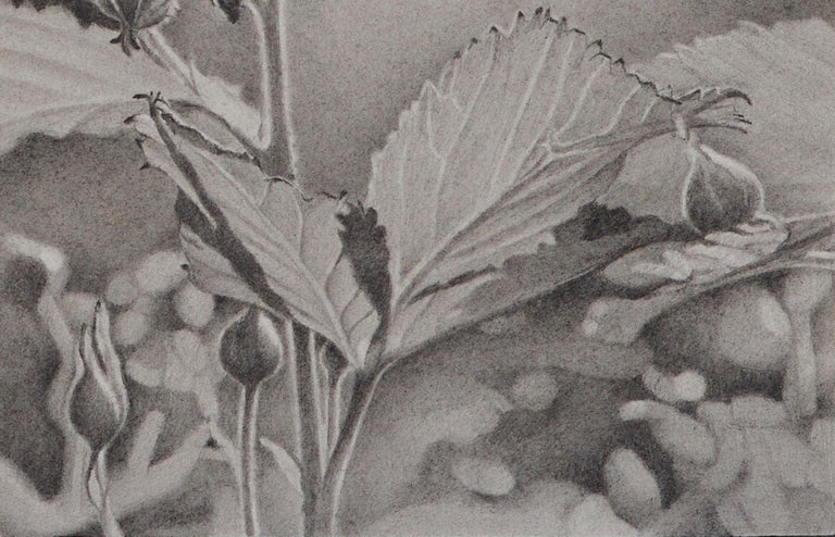 Mary Reilly, Buds and Leaves, photorealist graphite floral drawing, 2018 - Photorealist Art by Mary Reilly