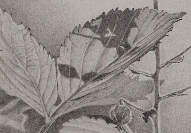Mary Reilly, Buds and Leaves, photorealist graphite floral drawing, 2018 - Gray Landscape Art by Mary Reilly