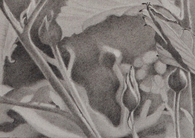Mary Reilly explores the full tonal depth of graphite in her nature drawings and landscapes. She finds all of the soft subtleties of gray as she shifts seamlessly from leaf to bud, shadow to highlight, foreground to background. Reilly uses a