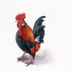 Rooster, contemporary realist gouache on paper animal miniature