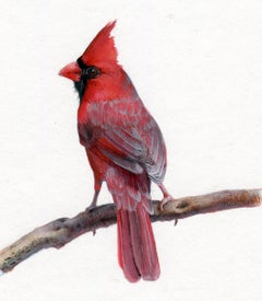 Dina Brodsky, Cardinal, realist gouache on paper miniature animal painting, 2019