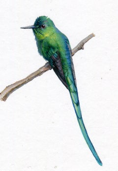 Long Tailed Sylph, blue and green realist gouache miniature animal portrait