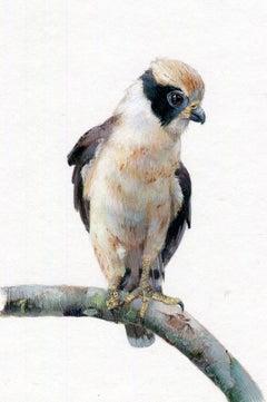 Laughing Falcon, realist gouache miniature animal portrait, 2019