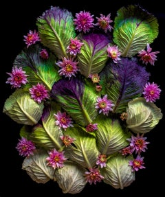 Sarah Phillips, Purple Savoy Cabbage Leaves, still life food photograph