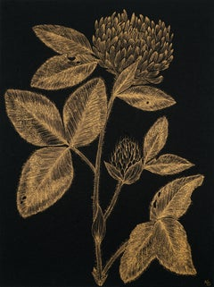 Red Clover #2, gold ink and black botanical still life drawing, 2020