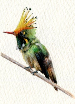 Rufus Crested Coquette, realist gouache miniature bird portrait, 2020