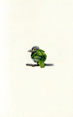 Lineated Barbet, realist gouache on paper miniature bird portrait, 2020