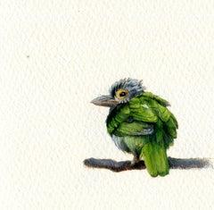 Lineated Barbet, realist gouache on paper miniature bird portrait, 2020