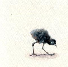 Waterhen Chick, realist gouache on paper miniature bird portrait, 2020