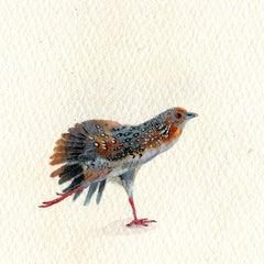 Ocellated Crake, realist gouache on paper miniature bird portrait, 2020