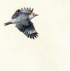Gold-fronted Woodpecker, realist gouache on paper miniature bird portrait, 2020