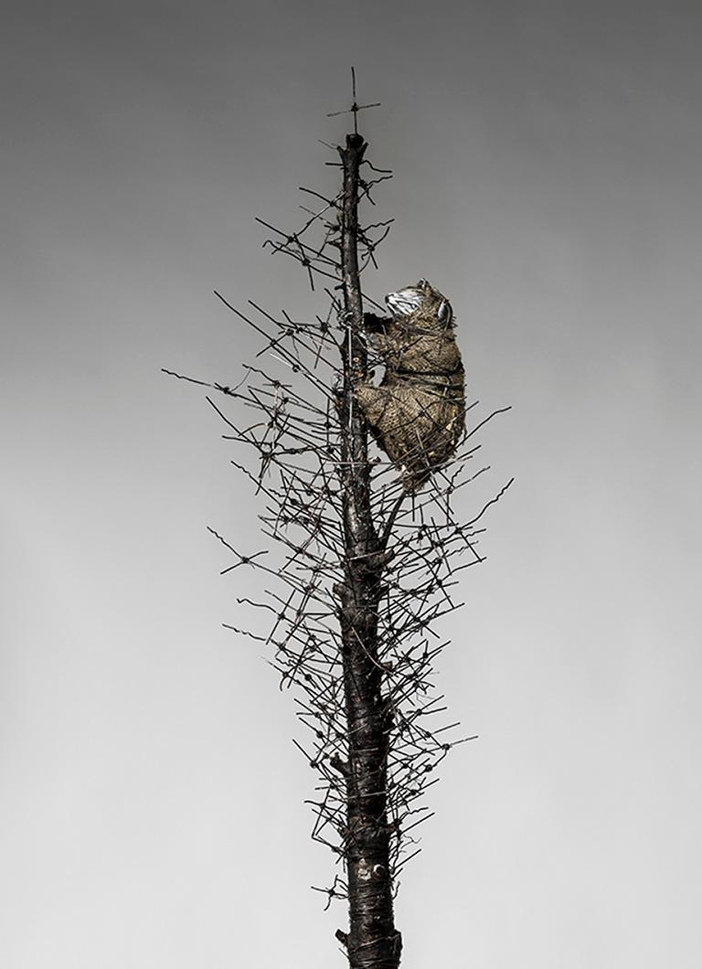 Tall Tree sculpture with wire & creature: 'O' Tannenbaum' For Sale 1