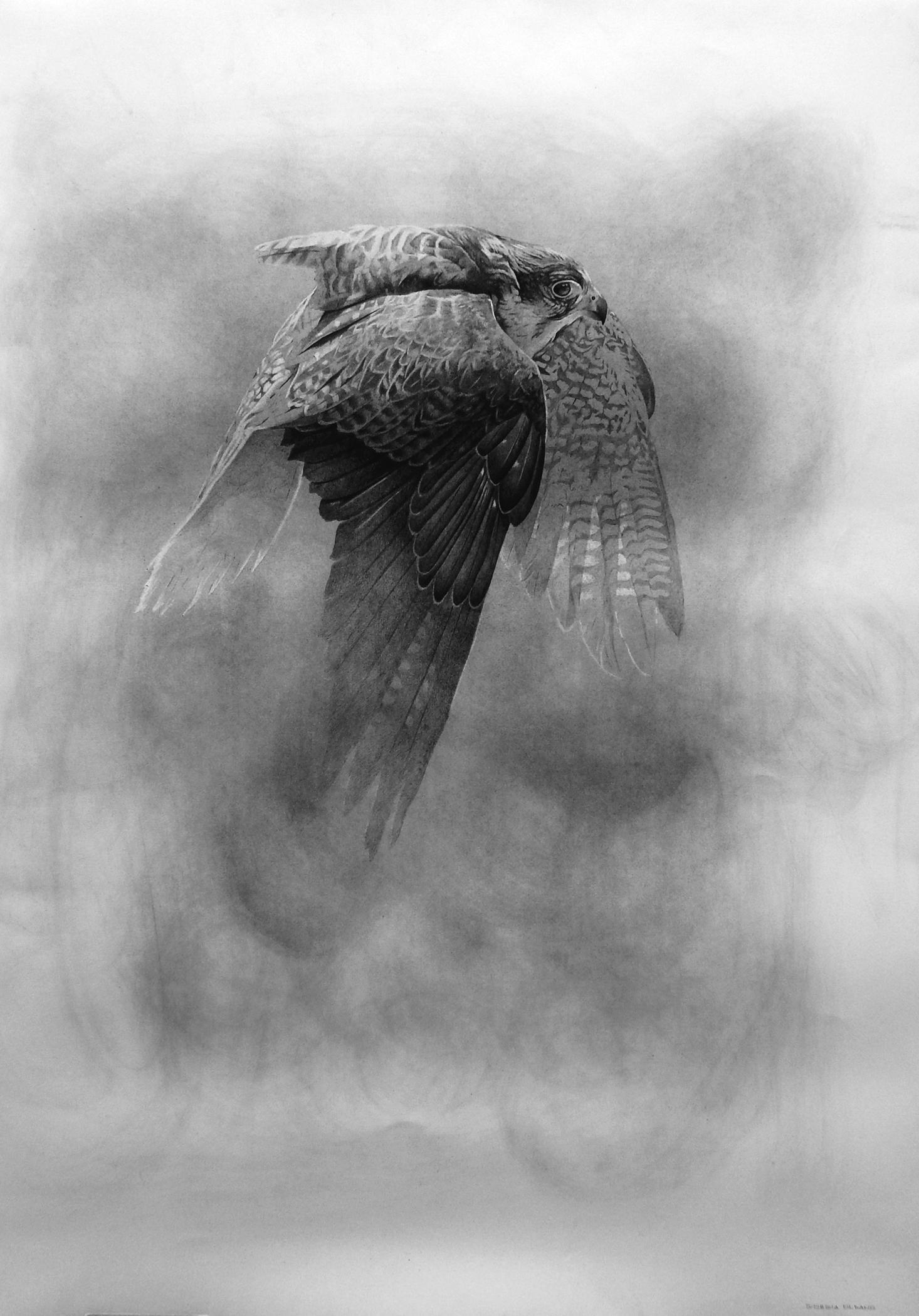 Hawk black & white pencil drawing, Italian contemporary painter