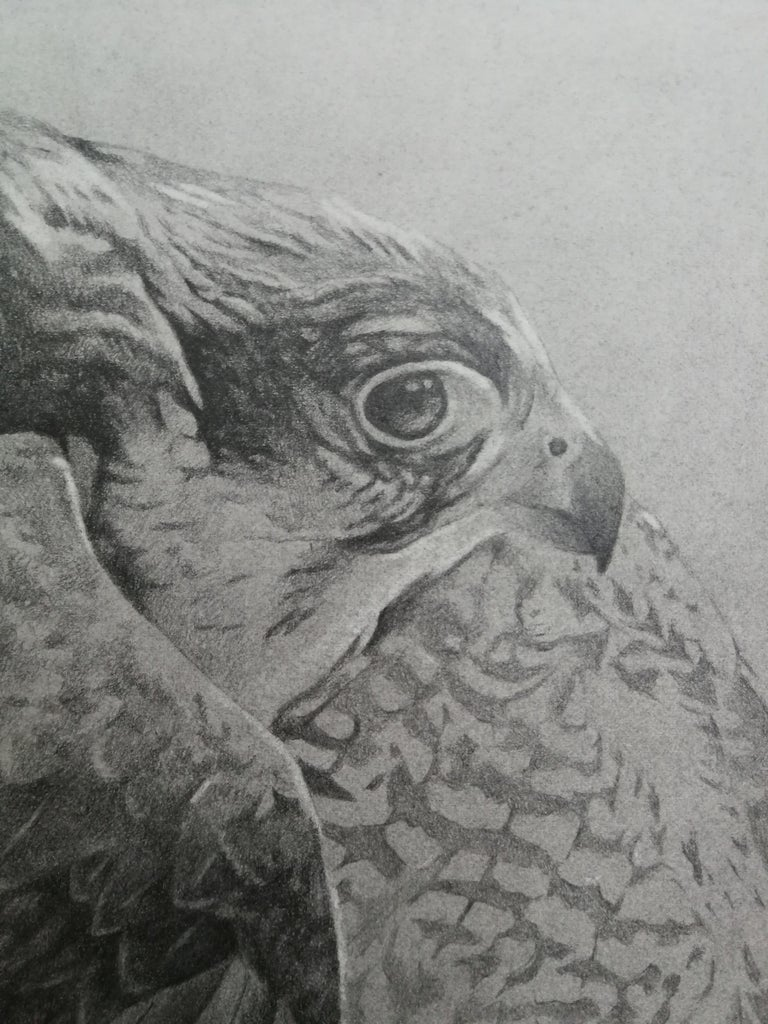 Hawk black & white pencil drawing, Italian contemporary painter - Art by Giorgia Oldano