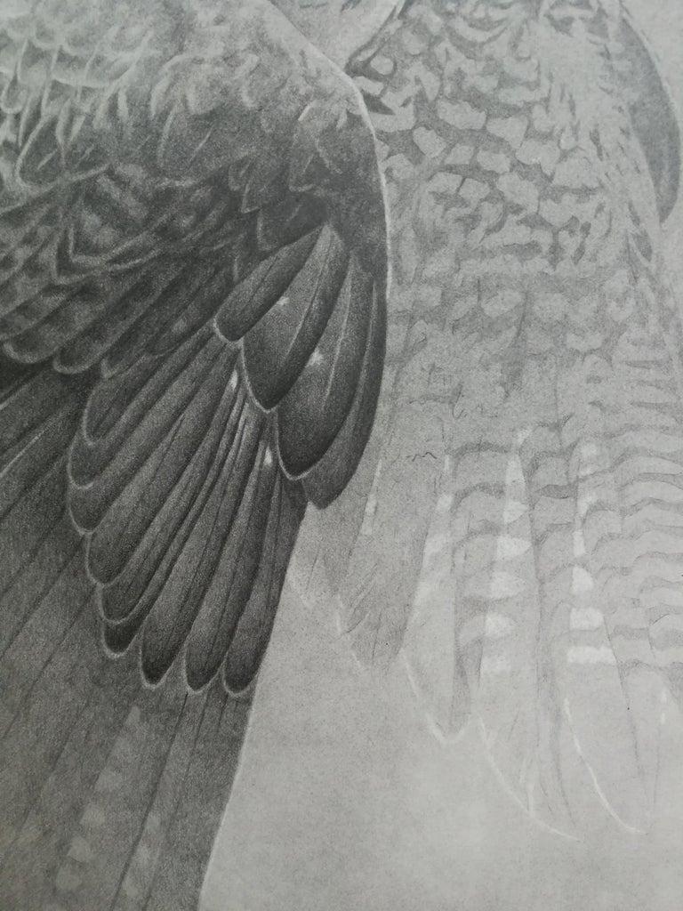 Hawk black & white pencil drawing, Italian contemporary painter - Contemporary Art by Giorgia Oldano