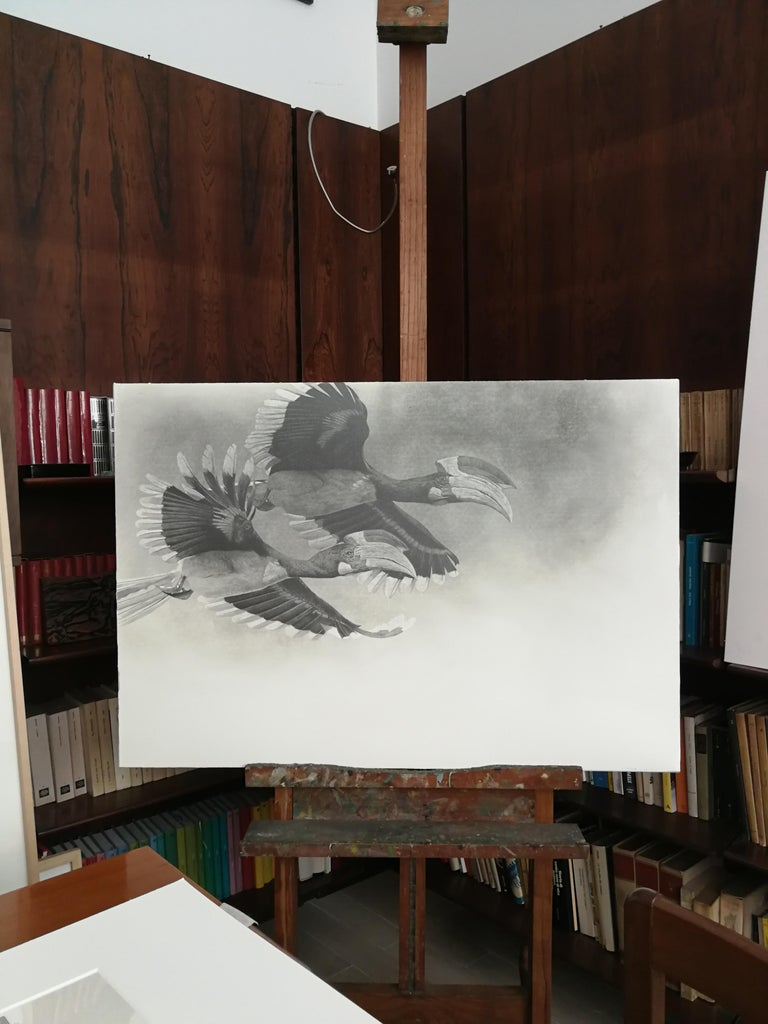 Brasilian bird buceros - black and white pencil drawing by contemporary italian  - Art by Giorgia Oldano
