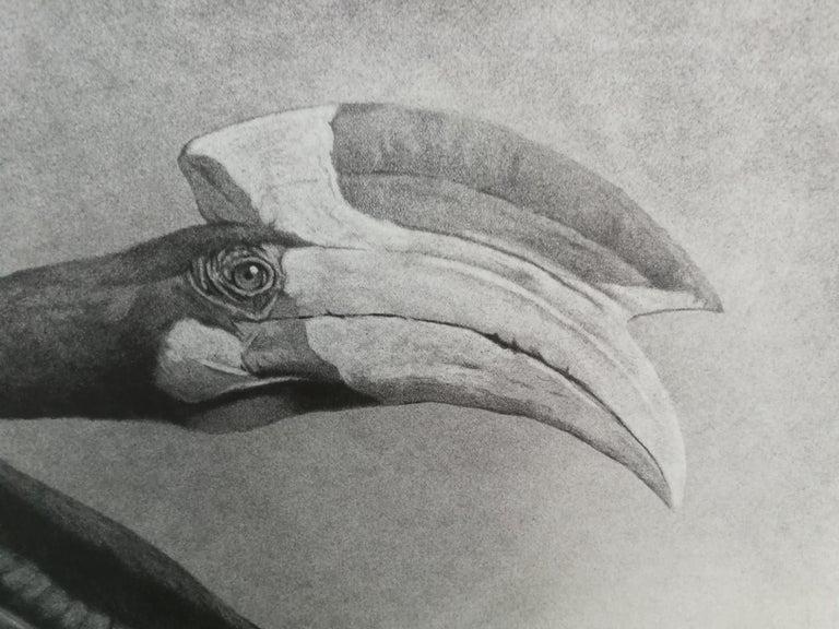 Brasilian bird buceros - black and white pencil drawing by contemporary italian  - Realist Art by Giorgia Oldano