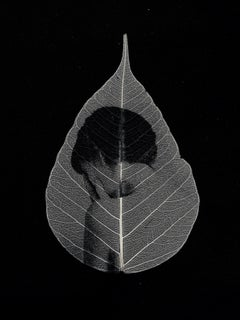 Alone -black and white transferred photograph onto preserved skeleton leaf