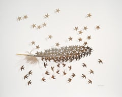 Star Above - brown gold bird feather 3D wall sculpture composition on paper