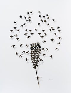 Where stars come from - black bird feather 3D sculpture composition on paper