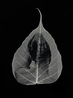 Head in hand -black and white transferred photograph on preserved skeleton leaf