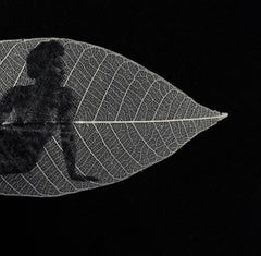 Looking east -black and white transferred photograph on preserved skeleton leaf