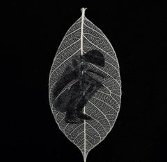 Sitting -black and white transferred photograph on preserved skeleton leaf