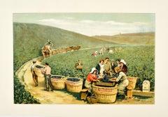 Original Antique J. Bollinger Champagne Poster Sparkling Wine Vineyard Ay France