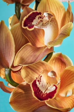 Orchid 02, spring limited edition, personally signed, printed on aluminium