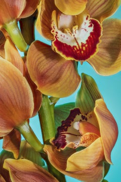 Orchid 03, Spring limited edition, Printed on aluminium, signed by the artist